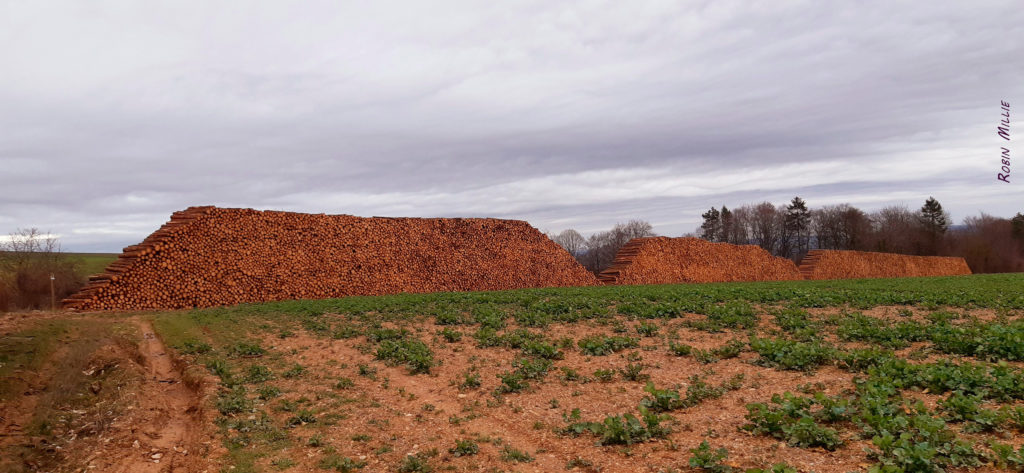 montagne de troncs morts empilés pour l'article de robin millie