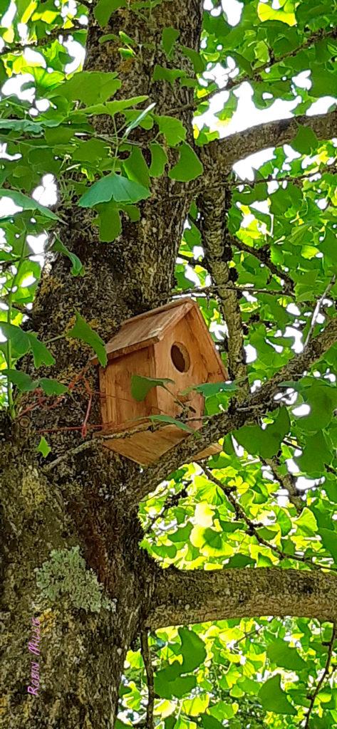 petite maison des oiseaux pour l'article la forêt fantôme