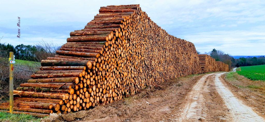 montagne de troncs mort empilés sur 6 mètres