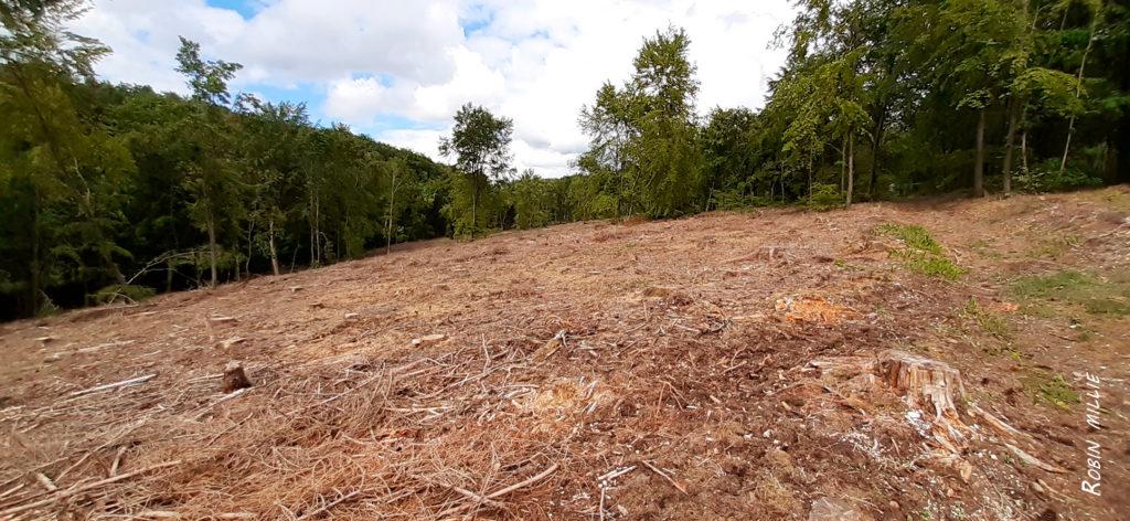 forêt dévastée pour l'article de robin millie la forêt fantôme
