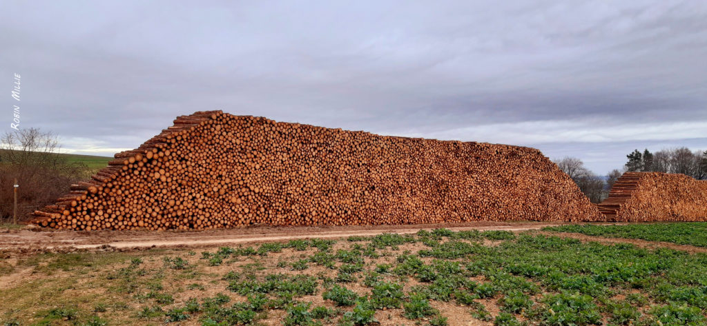 montagne 2 de troncs morts empilés