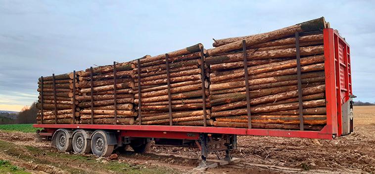 troncs prêts à etre transporter