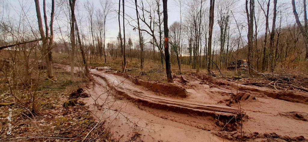 travail grossier en forêt pour article de robin millie