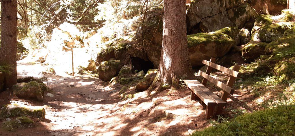 Robin Millie moment de détente sous un arbre